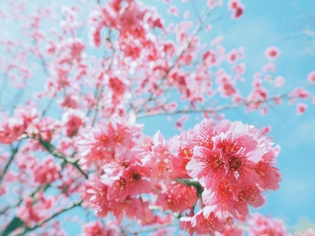 なんとかムーンの種類:4月はピンクムーン