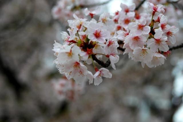 雨は季節ごとに種類が違う;春の雨