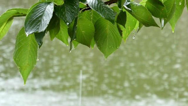 にわか雨と通り雨の違い