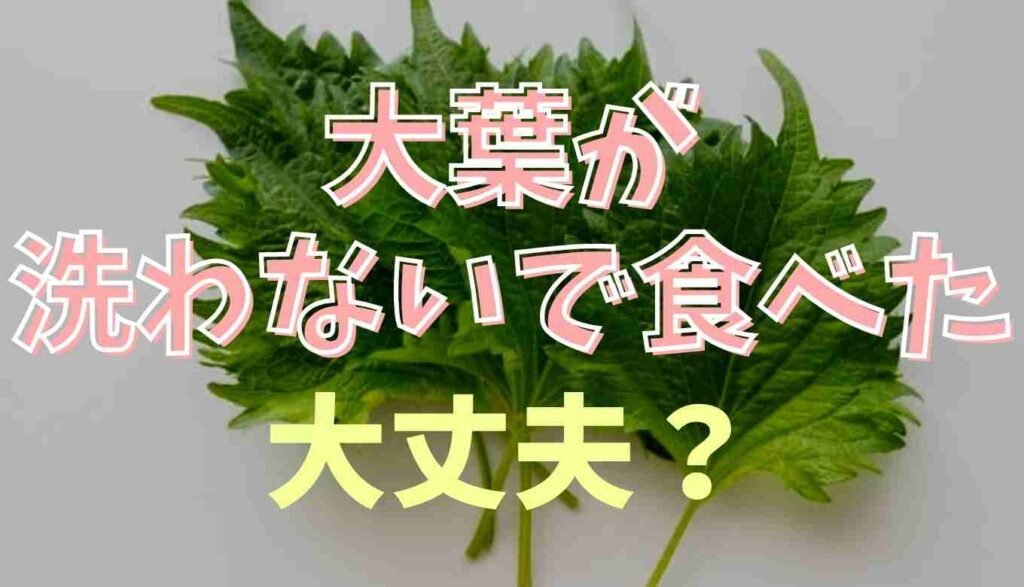 大葉を洗わずに食べたらどうなる?